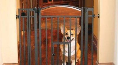 Baby Gates Pet Door Your Best