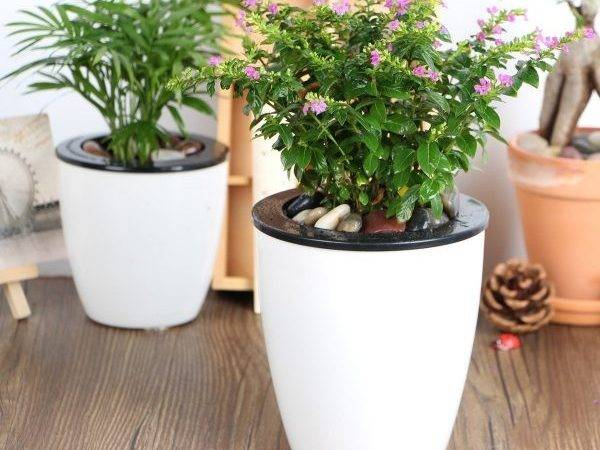 Big List Self Watering Planters Stylish