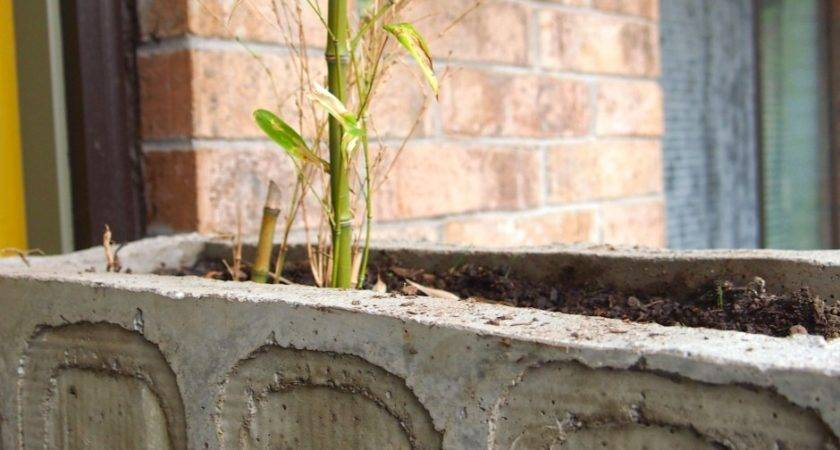 Diy Concrete Planter Easier Than Looks