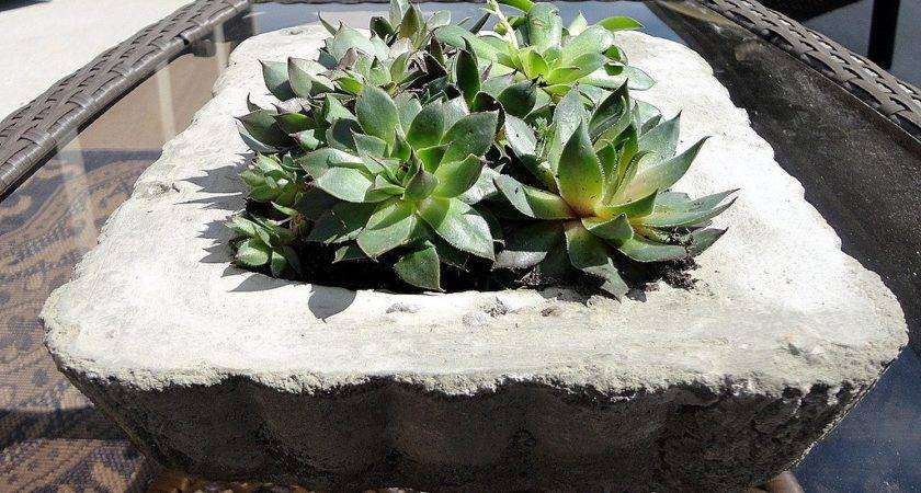 Diy Concrete Tray Planter Video Tutorial Cleverly Inspired