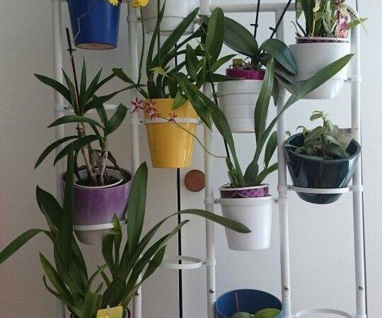 Orchid Plant Stand Ikea Socker Now Can Have More