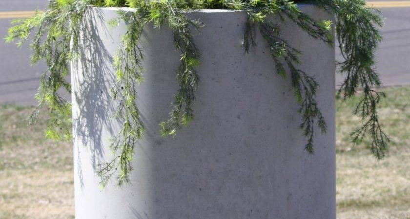 Tall Outdoor Plants Bloom All Summer Round