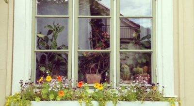 Window Box Ideas Outdoortheme