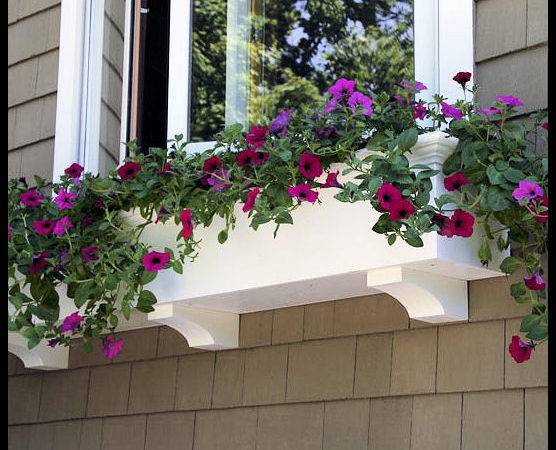 Window Boxes Planters Extraordinary Selection